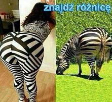 zebra z paskami śmieszne po...