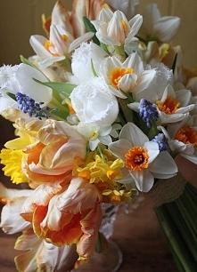wiosenny bukiet ślubny / tulipany papuzie, żonkile, narcyze i szafirki/
