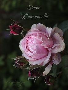 """Soeur Emmanuelle"""