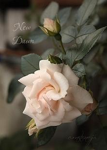"""""""New Dawn"""""""