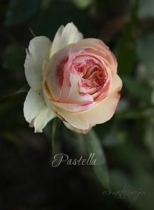 """""""Pastella"""""""