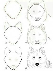 nauka rysowania wilka