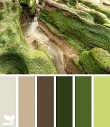 - jasny beż, średni beż, brąz, zieleń mchu, trawiasty, melon zielony.