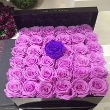 różowe róże i fioletowa róża