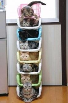 Kocia hierarchia musi być ^_^