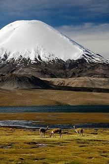 Park Chile