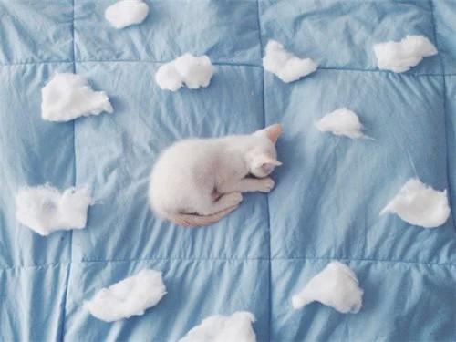 Mały kotek
