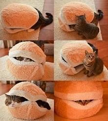schowek dla kotka :)