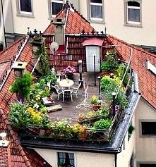 ogród na dachu...