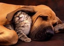 Lubicie drzemki w parach? Bo zwierzaki zdecydowanie uwielbiają taką formę odpoczynku!