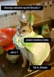 Te pomysły kotków :D