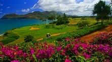 Hawaje, najmłodszy z 50 stanów USA, Jest to jedyny stan leżący wyłącznie na wyspach w północno-środkowej części Oceanu Spokojnego:) Moim zdaniem jest to niezwykle miejsce juz sa...