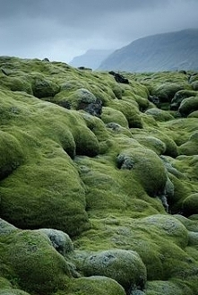 lava fields covered with mo...