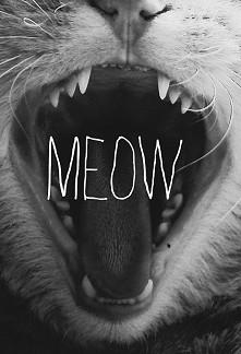 meow <3