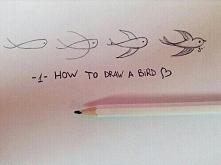 Jak narysować ptaka :)