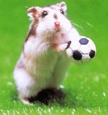 Chomiczek Gra w Piłkę Nożną