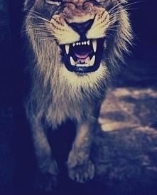 Zwierzęta są wspaniałe! <3 !