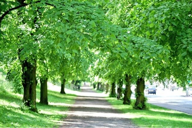 Green in Edinburgh