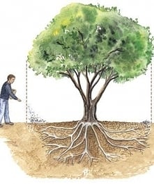 jak nawozimy drzewa