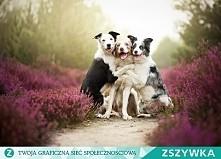 najlepsi przyjaciele>:)