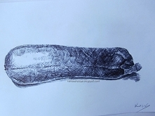 Cukinia  Format: A5 Materiały: Czarny długopis PaperMate Więcej na: remdesrys...