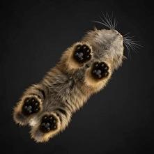 Kotek od dołu