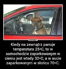 Pamietaj nigdy nie zostawiaj zwierzaka w zamknietym samochodzie !!!