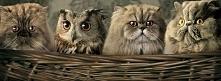 Zwierzaki, które wzruszają i śmieszą do łez