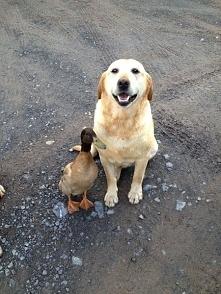 Mamo,Tato , to jest mój kumpel Henryk :)