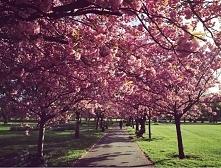 Greenwich Park ♥