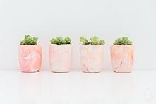 ••plaster planters