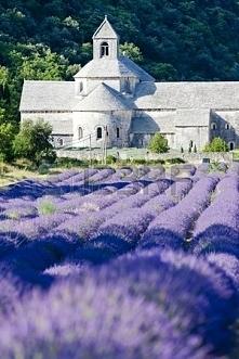 Senanque opactwo z lawendowego pola, Prowansja, Francja <3