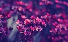 florxies