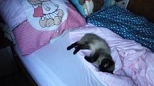 ...nareszcie wstali, mogę pospać.. :))