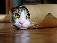 Owinięty kot.