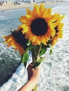 kocham słoneczniki ♡