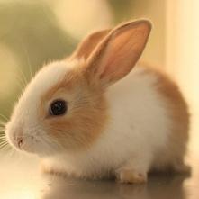 little rabbit^^