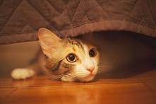 koteł :)