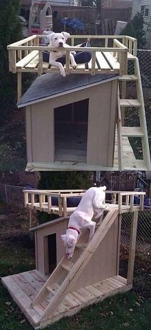 wymarzony dom dla psa :)