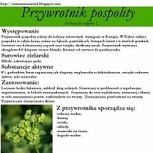 Przywrotnik pospolity to roślina, którą możemy obecnie spotkać na łąkach, pol...