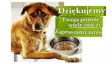 """Kliknij, by pomóc zwierzakom! (Codzienne wchodzenie na stronę """"pustamisk..."""