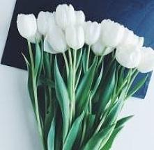 tulipany :))