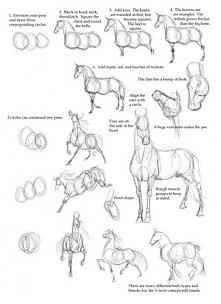 Jak rysować konia