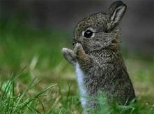 Mały, słodki króliczek