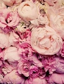 róż <3