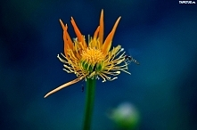 Kwiat i osa.