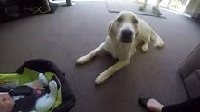 Ich pies poznał nowego członka rodziny. Jak go przyjął?