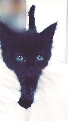"""Moja 9tygodniowa kotka """"ASTRO"""" najwspanialszy prezent jaki można dostać na całe życie :*"""