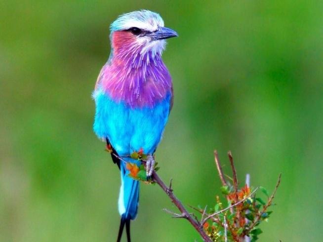 Niebiesko-fioletowy ptak