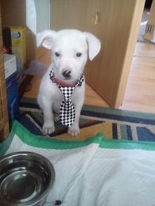 Elegancik mały :)